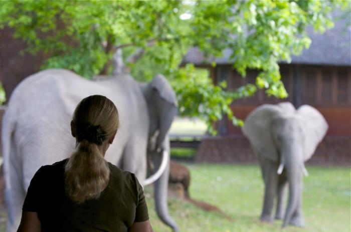 Eléphants dans le jardin de Mfuwe Lodge