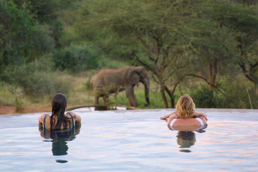 Eléphant devant piscine Sarara Camp