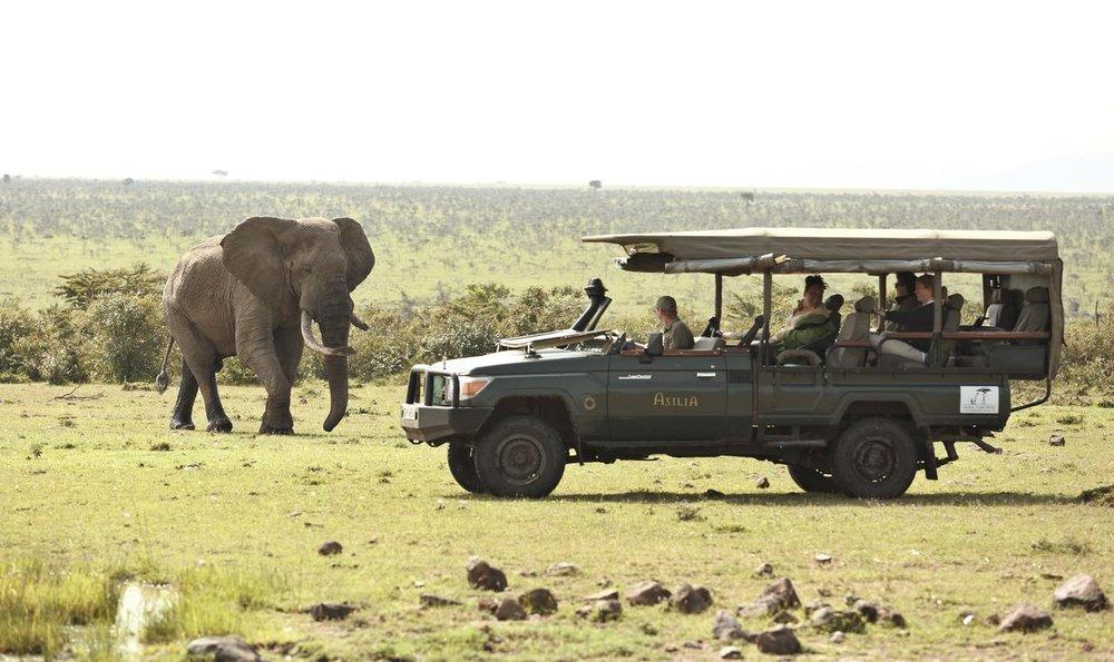 Safari en 4X4 Naboisho  et éléphant