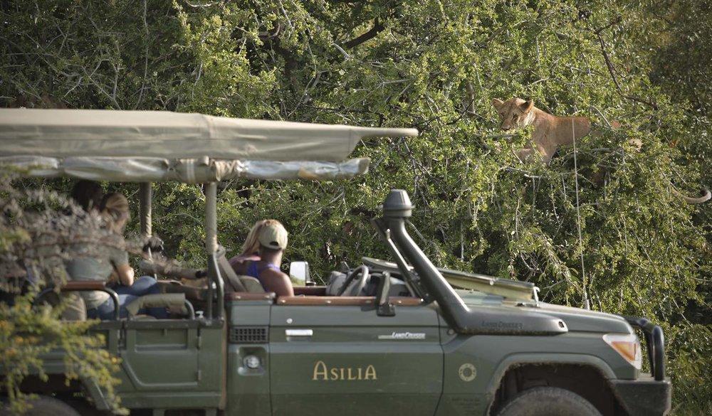 Safari en 4X4 lion dans arbre