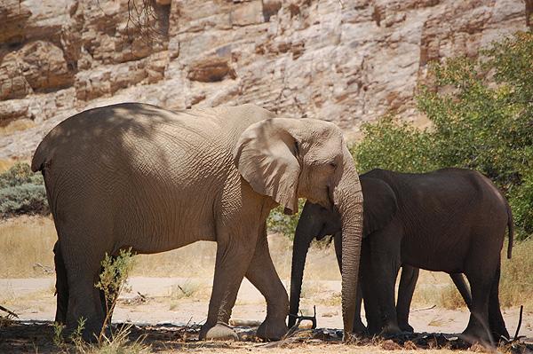 Safari Expérience authentique avec les Himbas - éléphants du désert