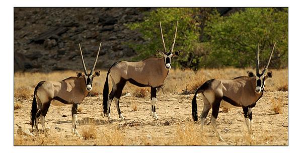 Safari Expérience authentique avec les Himbas - oryx