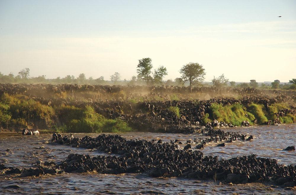 Safari Serengeti, Tarangire et Zanzibar en français - migration