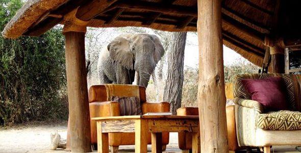 Safari Serengeti, Tarangire et Zanzibar en français - éléphant à Oliver's