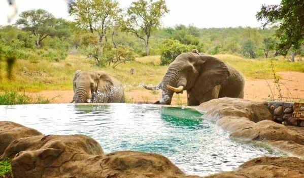 Voyage de noces réserves privées Afrique du Sud et Mozambique - éléphants devant piscine Motswari