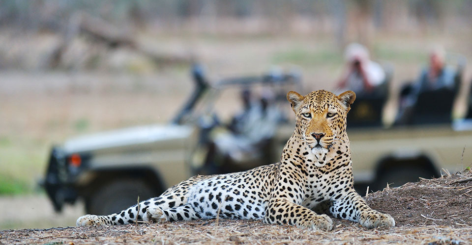 Safari le meilleur de la Zambie - Nkwali
