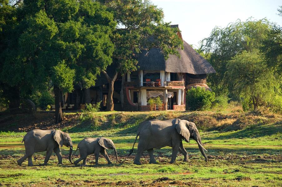 Safari le meilleur de la Zambie - Nkwali camp