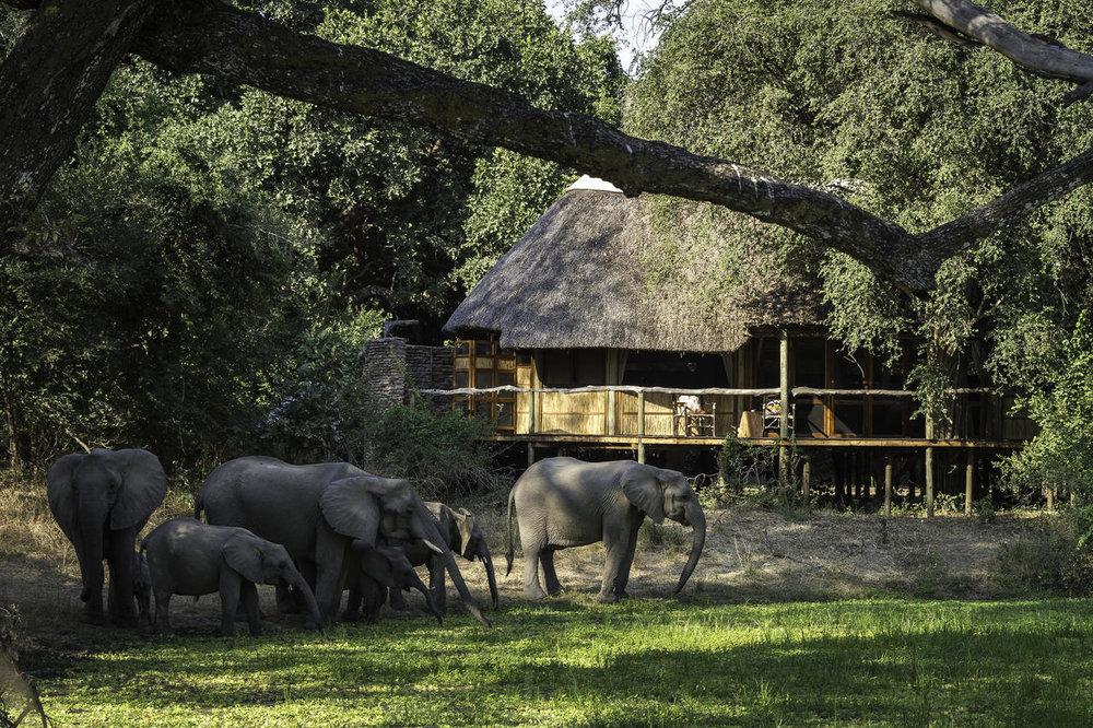 Eléphants devant Bilimungwe Bushcamp