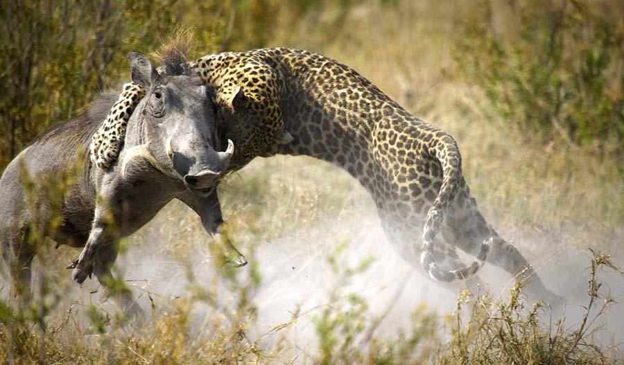 Safari Sublime Botswana - Léopard à Lagoon