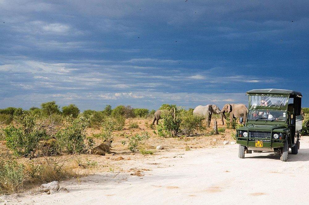 Safari Splendide Namibie - Safari dans Etosha