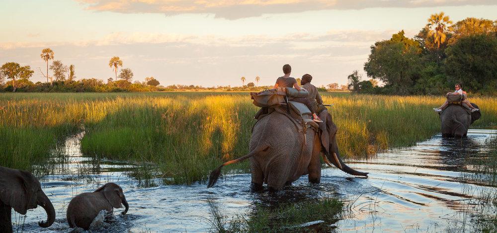 Safari Déserts et Plaines Africaines - Safari éléphants