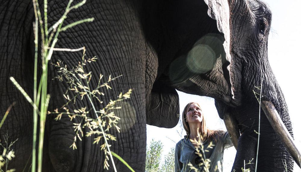 Expérience avec éléphant Abu camp