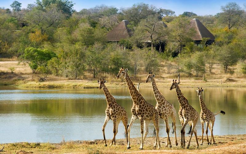 Safari beautés sud-africaines et détente au Spa - girafe à Chitwa