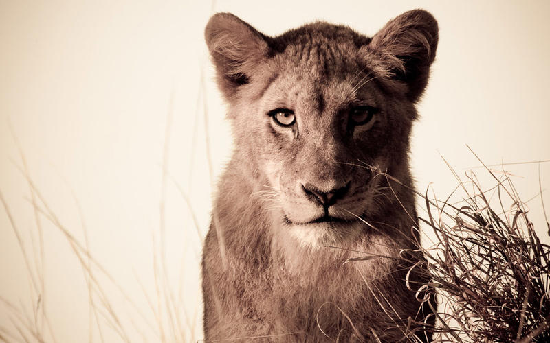 Safari beautés sud-africaines et détente au Spa - lion