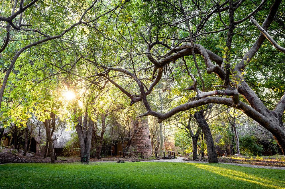 Forêt à Singita Pamushana