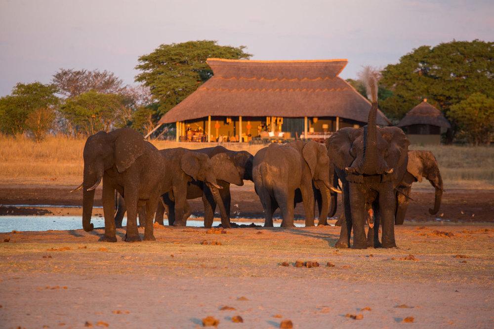 Eléphants devant le camp Hwange