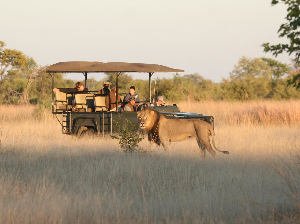 Safari en 4x4 au camp Hwange