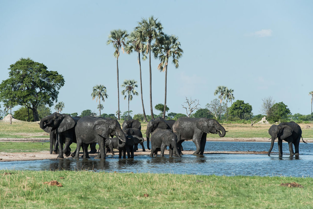 Eléphants au Linkwasha camp