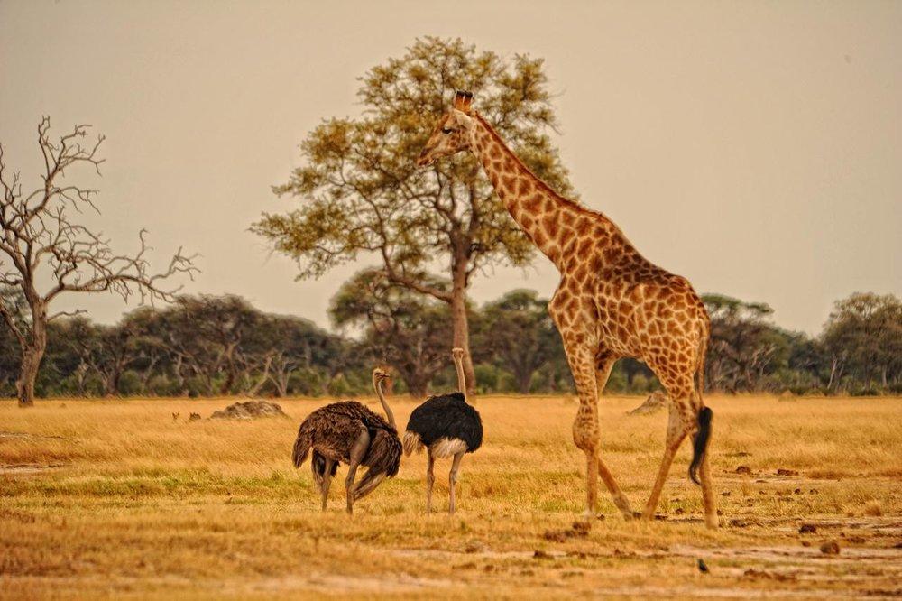 Vie sauvage au Somalisa camp