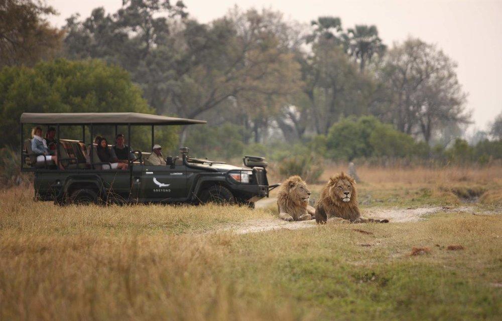 Safari Je Veux du Luxe en Afrique - safari à Sandibe