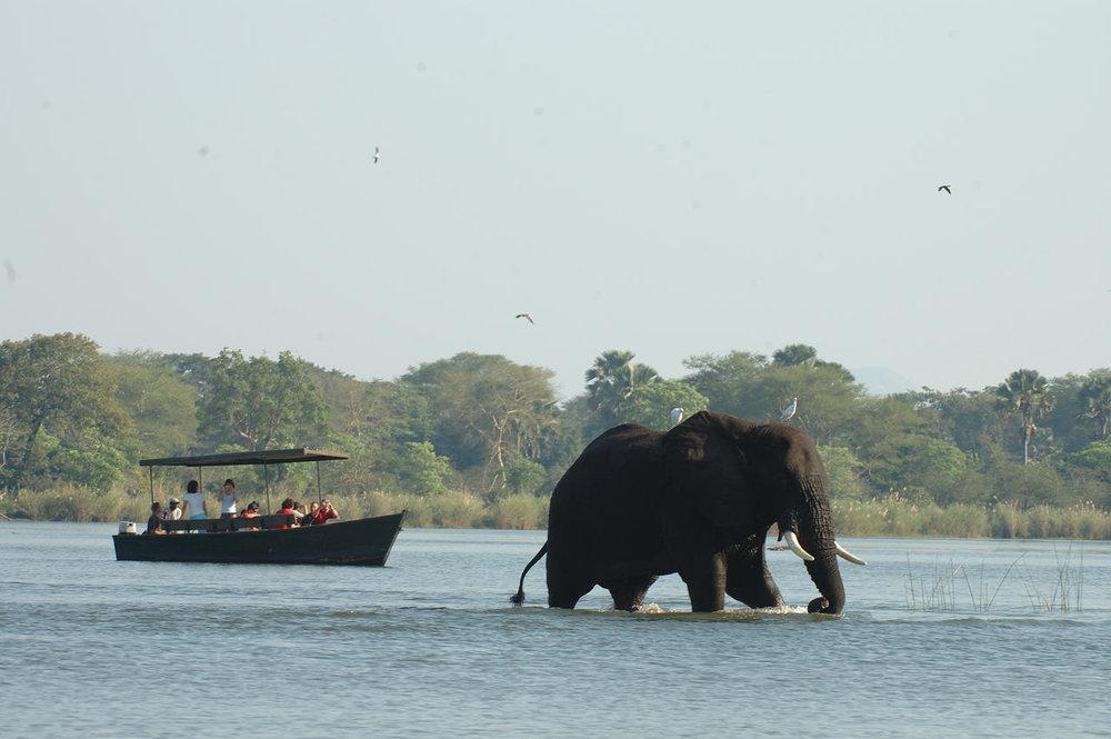 Safari en bateau au Mvuu Wilderness lodge