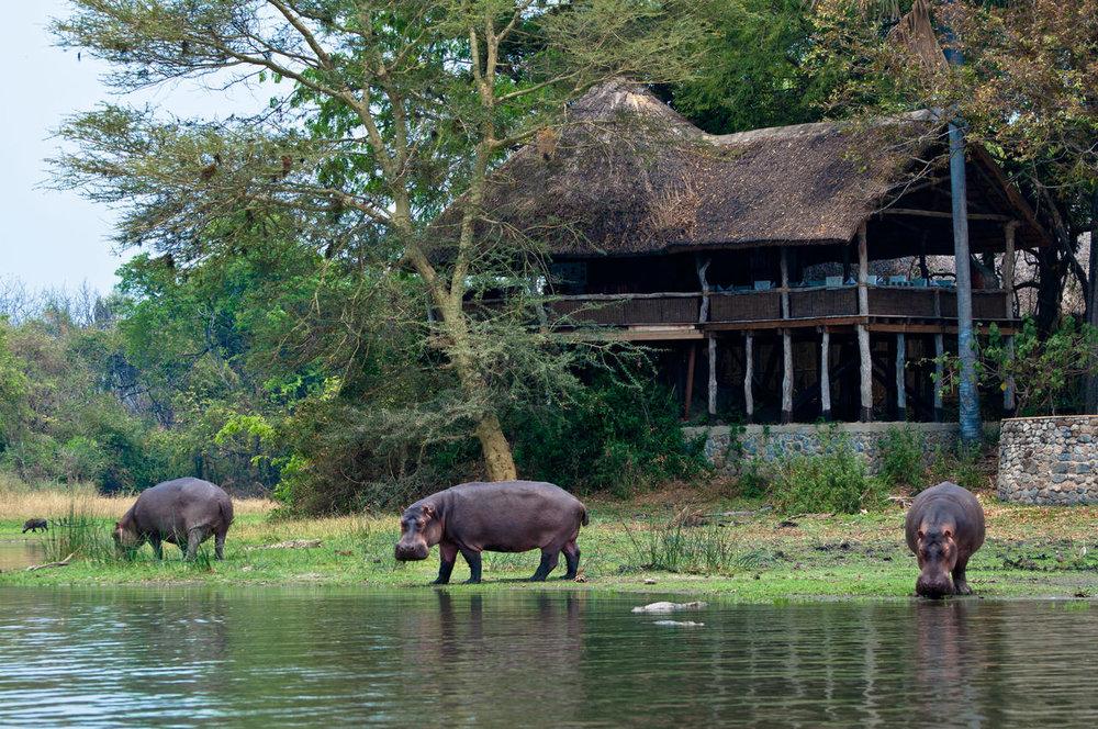Hippos devant le Mvuu Wilderness lodge