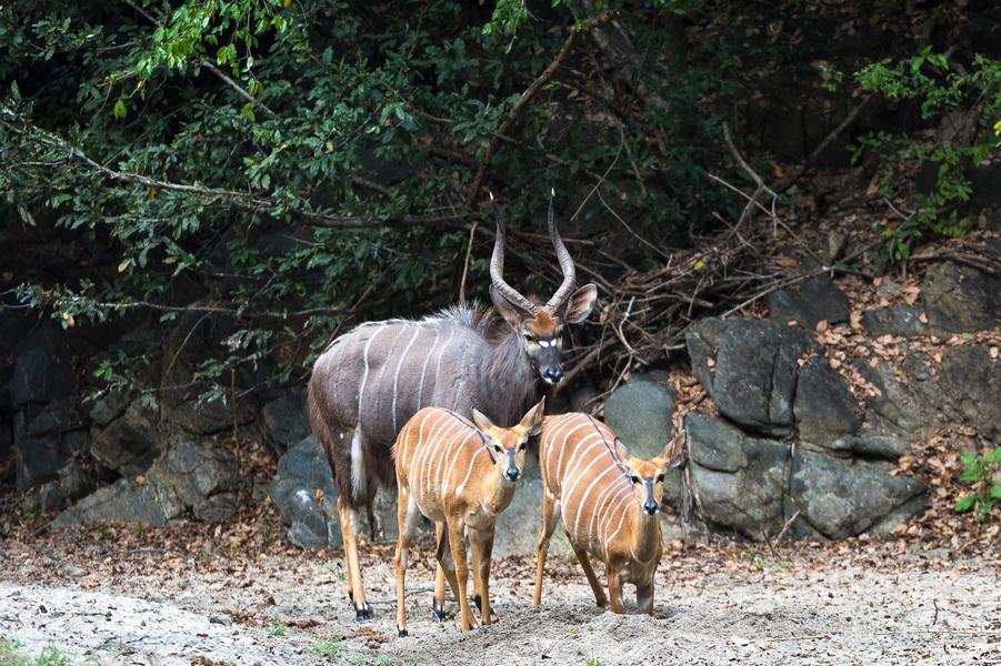 Vie sauvage au Mkulumadzi lodge