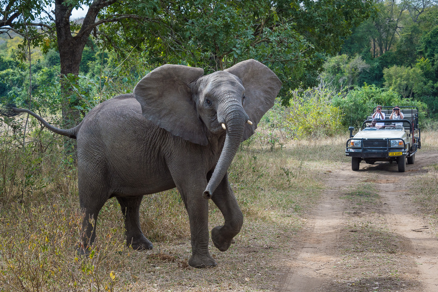 Safari en 4x4 au Mkulumadzi lodge