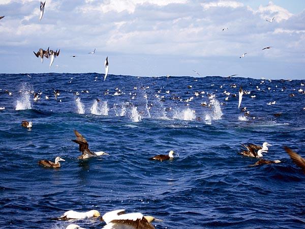La migration des sardine en Afrique du Sud