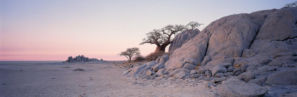 Safari en quad au Botswana - baobab