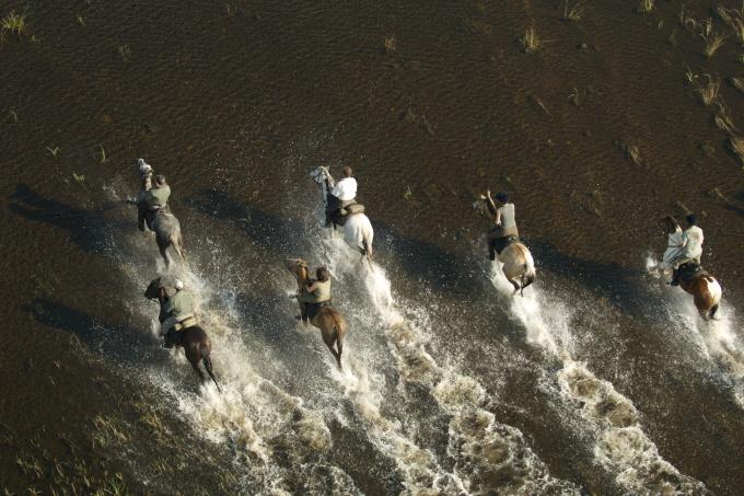 Safari à cheval au Botswana - cheval dans le delta