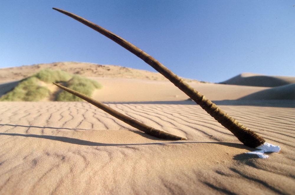 Safari la côte des Squelettes - squelette dans le désert