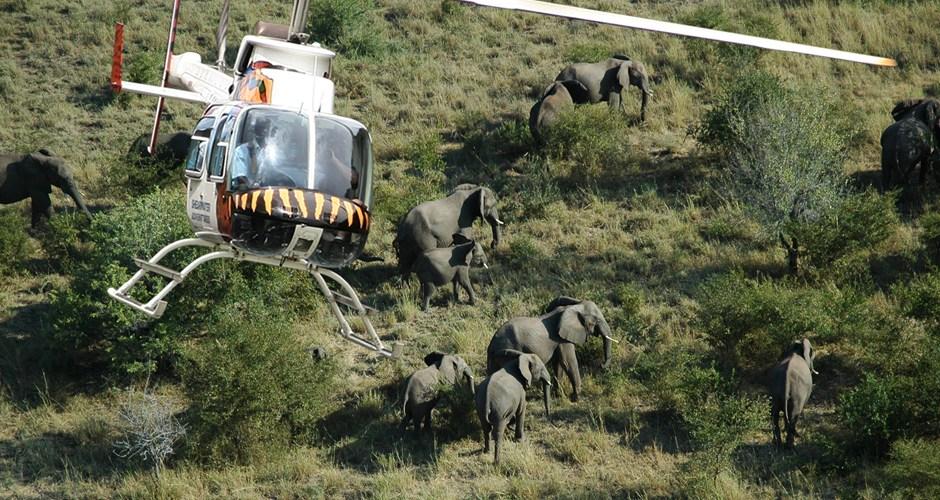 Survolez les chutes Victoria en hélicoptère - au dessus d'éléphants