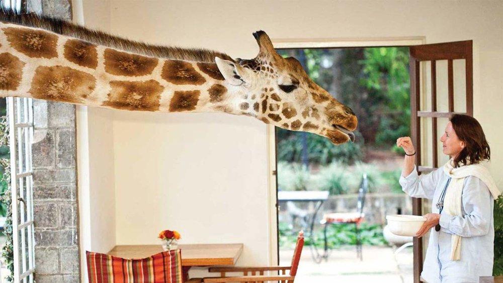 Voyage de noces Migration et Seychelles - Giraffe Manor