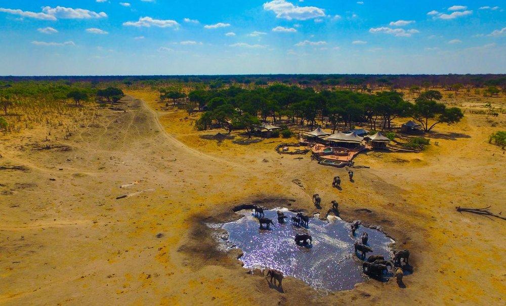 Safari Au Milieu des Eléphants - éléphants au Somalisa camp
