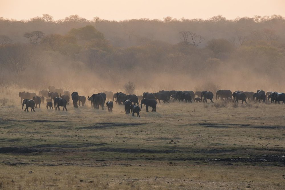 Safari Au Milieu des Eléphants - éléphants à Matetsi