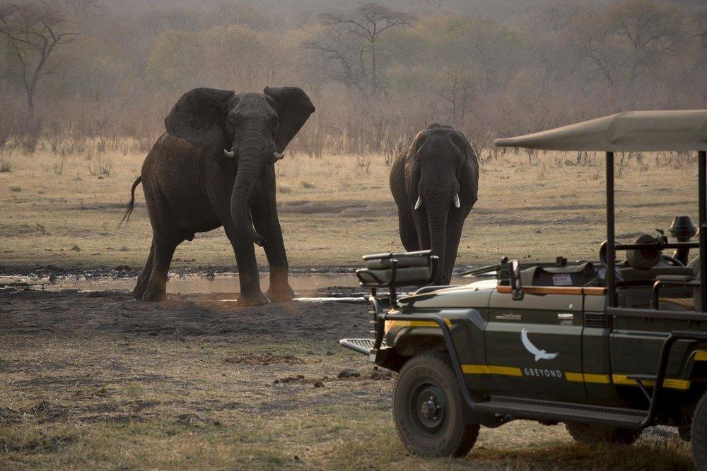 Safari Au Milieu des Eléphants - safari à Matetsi