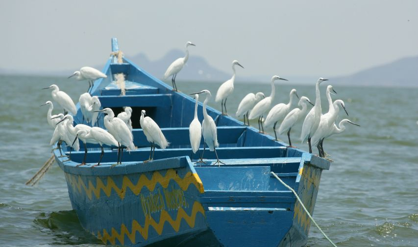 Pêcher sur le Nil au Mfangano Island lodge 4