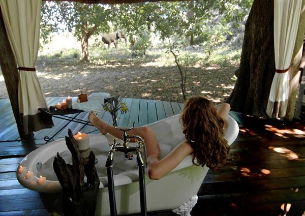 Safari Zambie et Malawi - baignoire à Chiawa