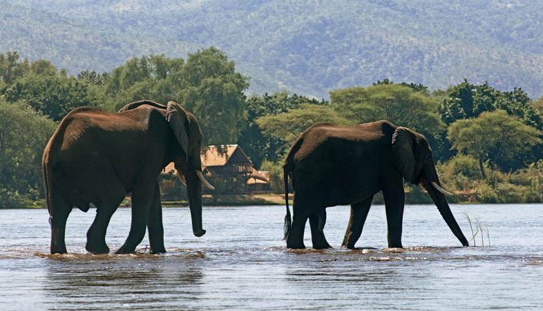Safari Zambie et Malawi - éléphants devant Chiawa