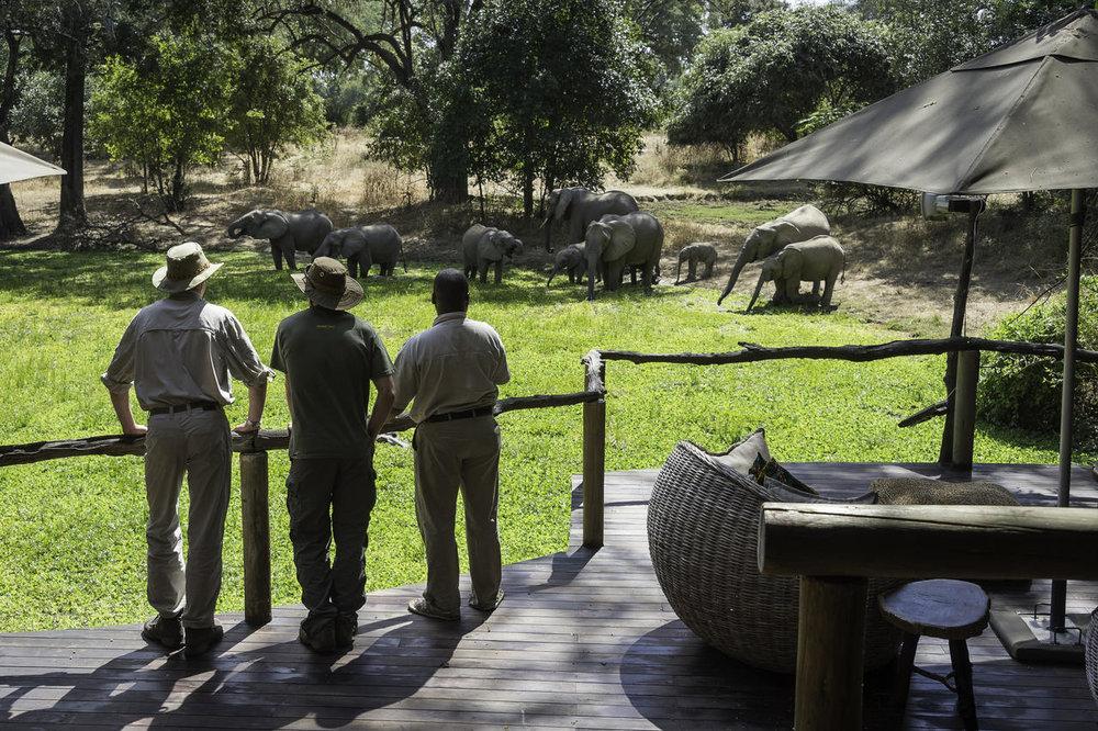 Safari Zambie et Malawi - éléphants à Bilimungwe Bushcamp