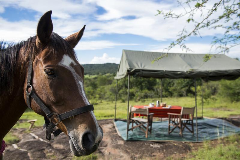 Safari à cheval en Ouganda - cheval de Mihingo