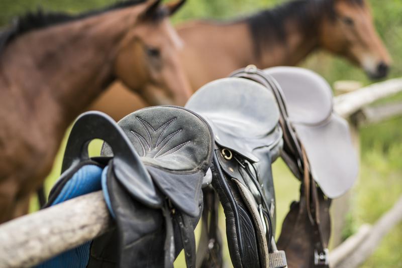 Safari à cheval en Ouganda - chevaux de Mihingo