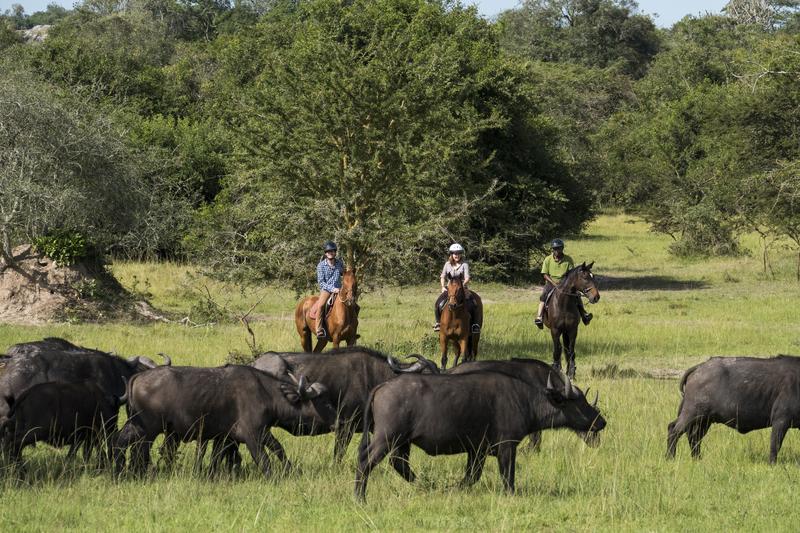 Safari à cheval en Ouganda - vue animaux de Mihingo
