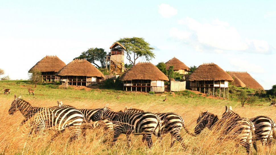 Safari le Meilleur de L'ouganda - zèbres devant Apoka