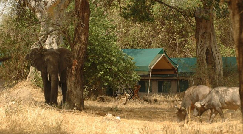 Safari Hors des Sentiers Battus Tanzanie - vie sauvage devant le Mdonya Old River camp