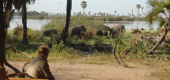 Safari Hors des Sentiers Battus Tanzanie - vue éléphants depuis le Lake Manze camp