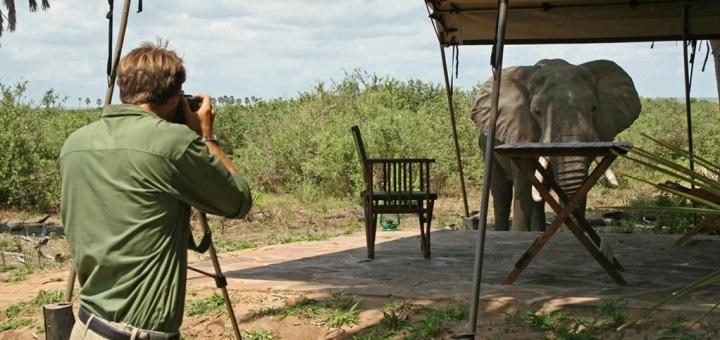 Safari Hors des Sentiers Battus Tanzanie - éléphant au Lake Manze camp