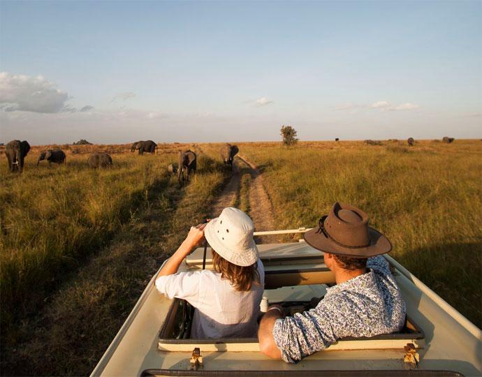Eléphants au Serengeti Safari camp