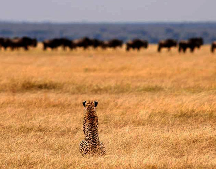 Vie sauvage au Serengeti Safari camp